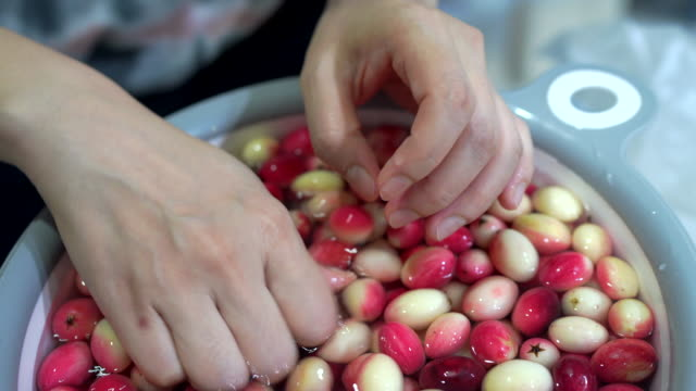 bengal currant fruit, wash the fruit. - currant stock videos & royalty-free footage