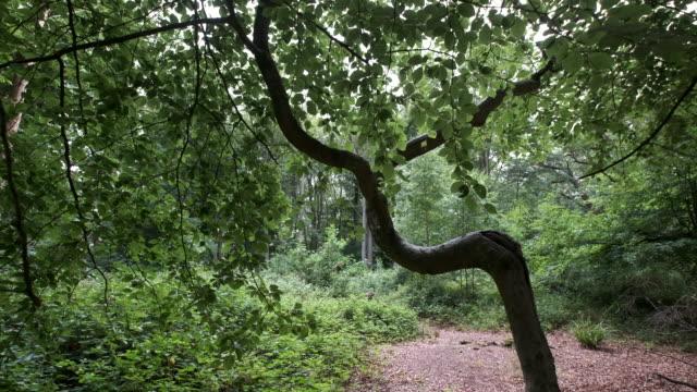 bent tree - tree stock videos & royalty-free footage