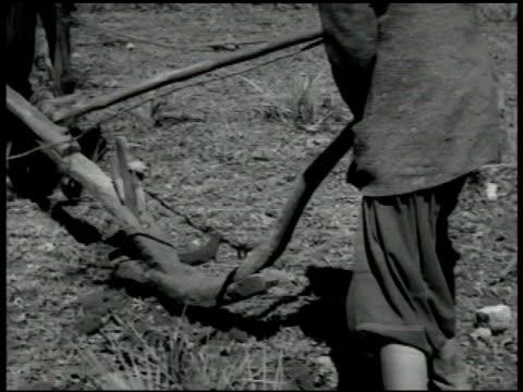 berber people man child animals at watering hole berber tribesman plowing w/ wooden plow berber tribesman sitting outside in circle ms men eating vs... - newsreel stock videos & royalty-free footage