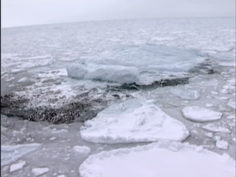 vidéos et rushes de low aerial, bergy bit or growler rising and falling in ocean swell, canada - iceberg bloc de glace