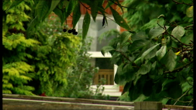 vidéos et rushes de three miles cross ext wilkinson's house seen beyond shrubs in garden dilapidated garden shed where replica guns were converted - délabré