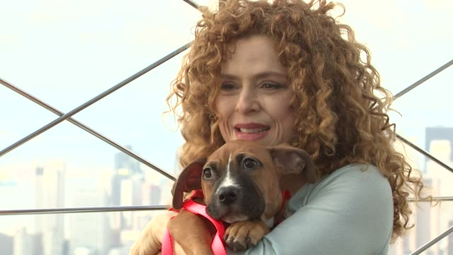 bernadette peters visits the empire state building for broadway barks adoptathon new york ny united states - バーナデット ピータース点の映像素材/bロール