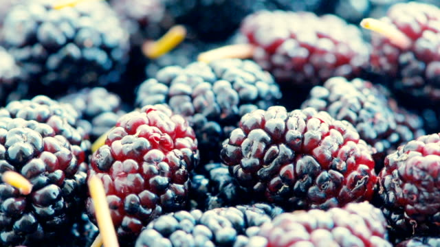berries mulberry, close up - spinning point of view stock videos & royalty-free footage