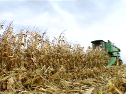 dried corn stalks in field, john deere combine harvester passing harvesting stalks. midwest usa - combine harvester stock videos & royalty-free footage