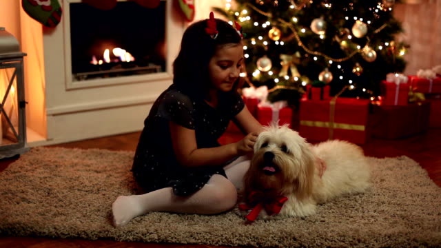 best christmas gift - maltese dog stock videos and b-roll footage