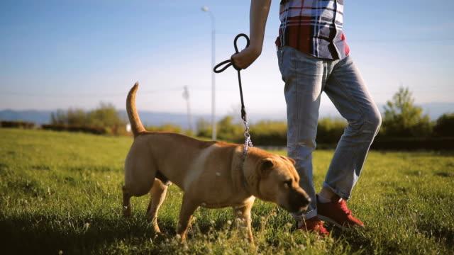 vídeos de stock e filmes b-roll de best friends - trela de animal de estimação