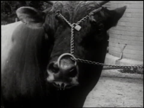 better milk - 3 of 14 - see other clips from this shoot 2101 stock videos & royalty-free footage
