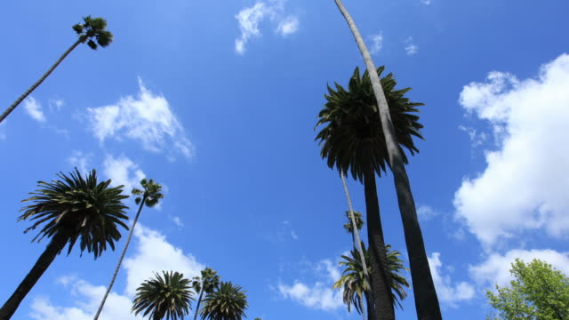 Beverly Hills-Time Lapse Video HD