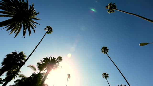 stockvideo's en b-roll-footage met beverly hills hd video - hollywood california