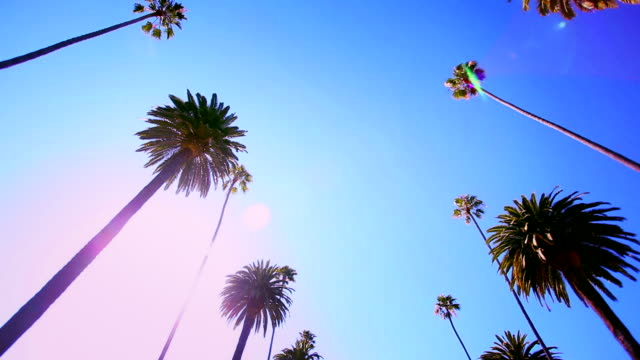 beverly hills hd video - palm tree stock videos & royalty-free footage