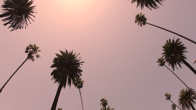 beverly hills palm trees - 4k - boulevard stock videos & royalty-free footage