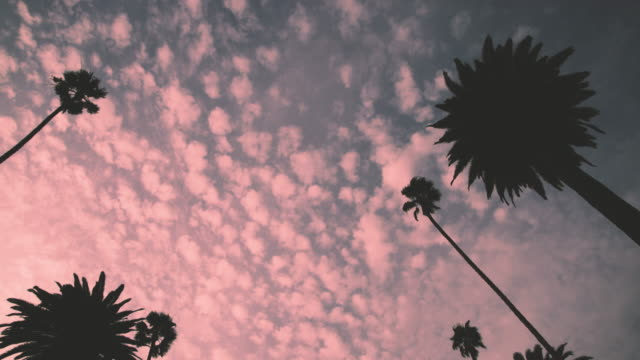 beverly hills palm trees - 4k - beverly hills california stock videos and b-roll footage