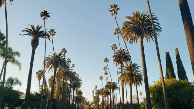 beverly hills palm trees and houses - beverly hills california stock videos & royalty-free footage