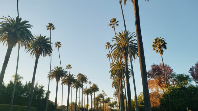 vídeos de stock e filmes b-roll de beverly hills palm trees and houses - palmeira