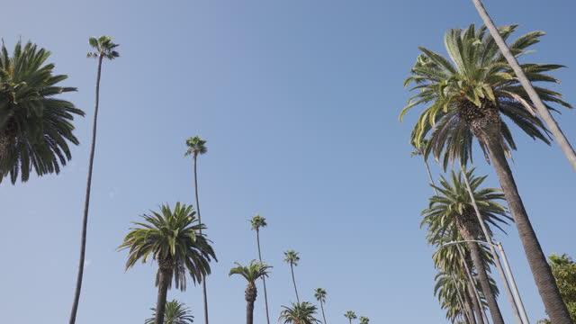ビバリーヒルズヤシの木 - beverly hills california点の映像素材/bロール