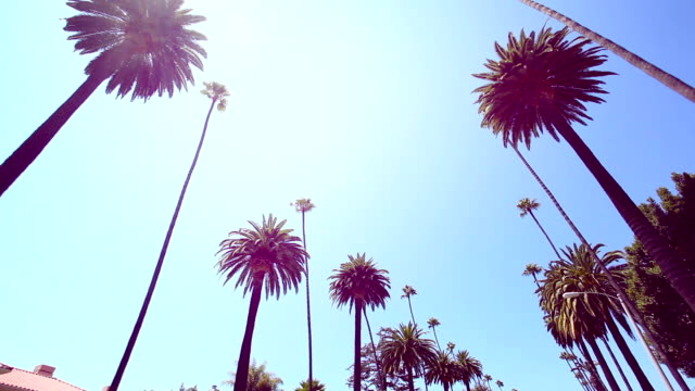 beverly hills palm trees - palm stock videos & royalty-free footage