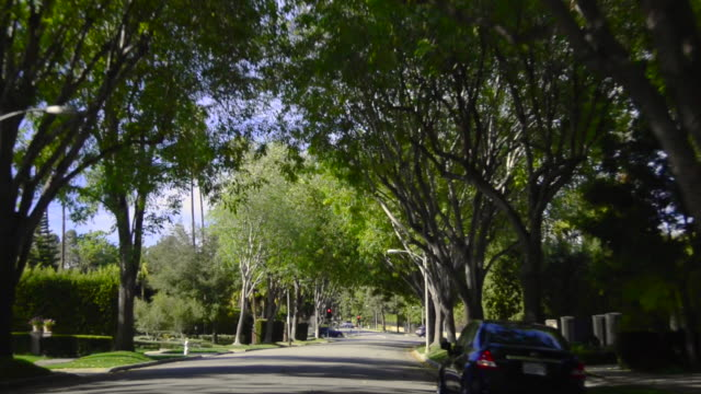 beverly hills street - treelined stock videos & royalty-free footage