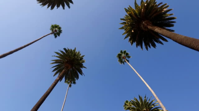 beverly hills - boulevard stock videos & royalty-free footage