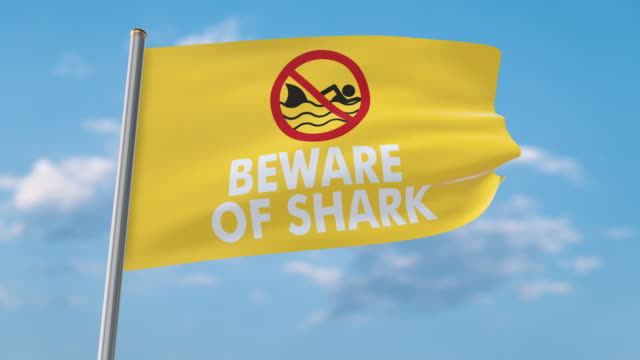 beware of shark waving flag (luma matte included so you can put your own background) - danger stock videos & royalty-free footage
