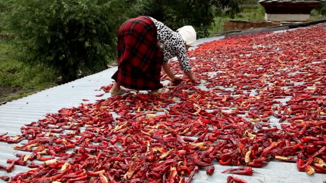 bhutan, paro - chilli pepper stock videos & royalty-free footage