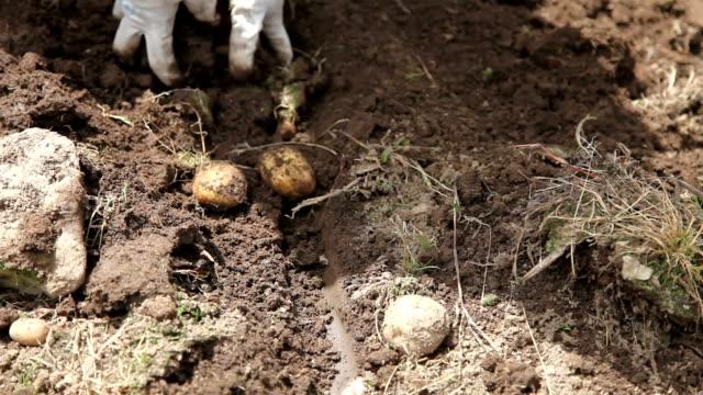 bhutan, phobjikha valley - digging stock videos & royalty-free footage