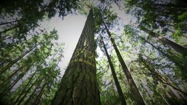 stockvideo's en b-roll-footage met bialowieza forest - plant attribute