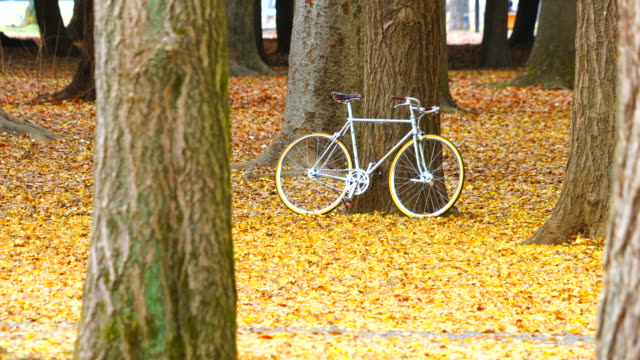 a bicycle is leaned against tree trunk on the many fallen leaves of ginkgo trees at yoyogi park shibuya tokyo japan on november 27 2018. - satoyama scenery stock videos & royalty-free footage