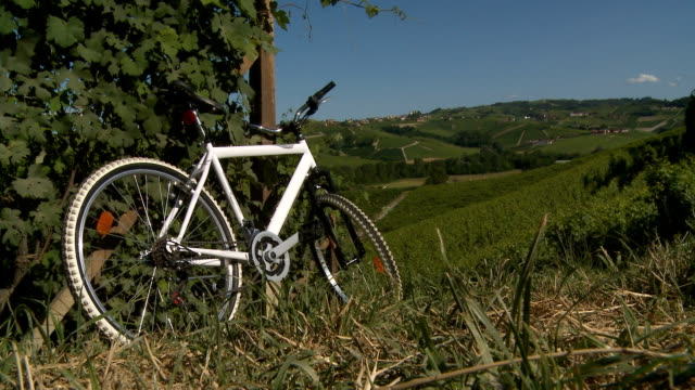 bicycle resting on a green vineyard row on a summer sunny - piemonte video stock e b–roll