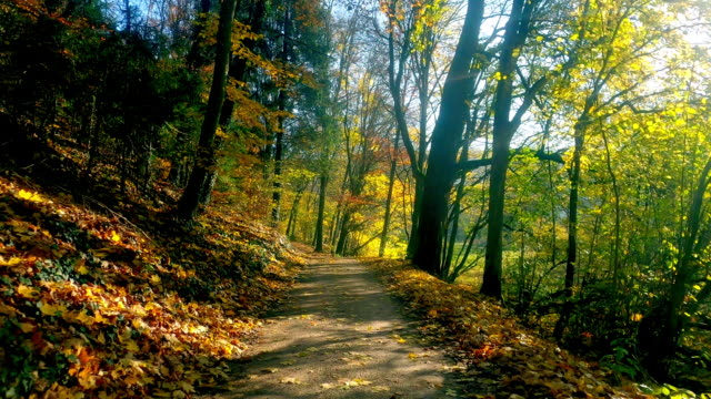 bicycle ride in colorful autumn forest - footpath stock videos & royalty-free footage