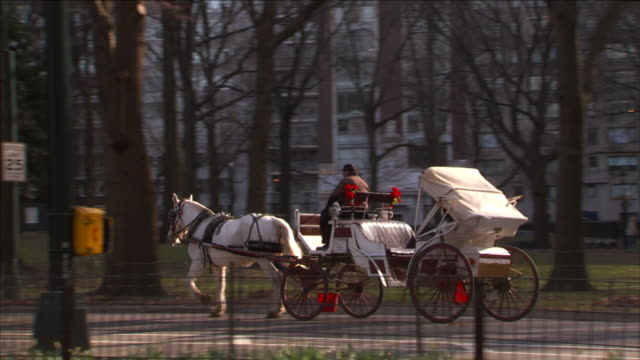 vidéos et rushes de a bicyclist passes horse-drawn carriages in central park. - voiture attelée