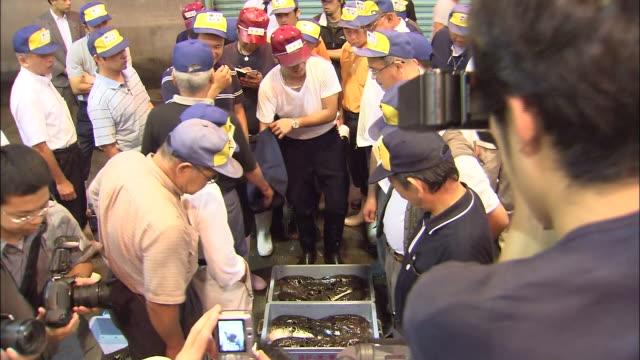bidders converse over bins of blowfish at haedomari market in shimonoseki, japan. - exchanging stock videos & royalty-free footage