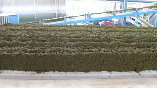 big amounts of fresh tea powder being transported through the factory on assembly lines. darjeeling tea is a tea from the darjeeling district in west... - var bildbanksvideor och videomaterial från bakom kulisserna