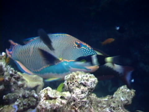 big and small tropical fish - tierisches exoskelett stock-videos und b-roll-filmmaterial