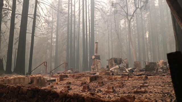 vídeos de stock, filmes e b-roll de big basin redwoods state park headquarters visitor center burned to the ground during a blaze that swept through the are in recent days - sequoia sempervirens