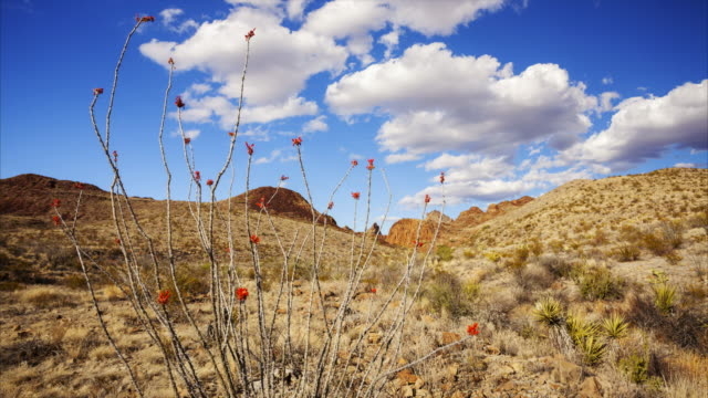 Big Bend National Park Desert Landscape - Time Lapse