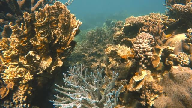 vídeos de stock, filmes e b-roll de big branching corals - organismo aquático