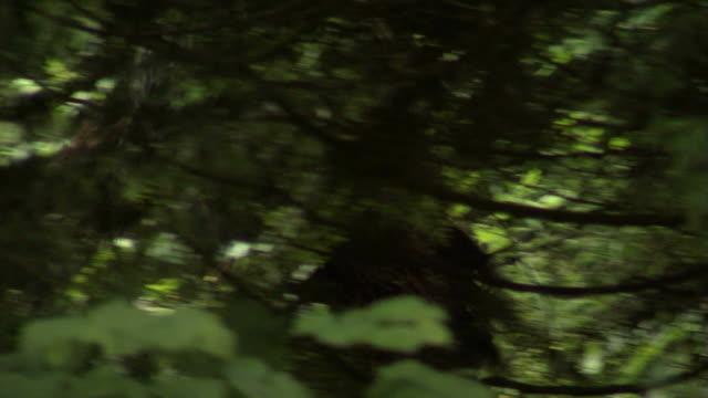 stockvideo's en b-roll-footage met big feet - prehistorische mens
