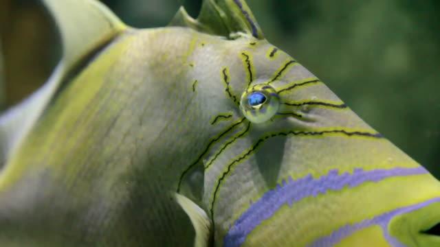 stockvideo's en b-roll-footage met big fish 104 - hd 30p - dierlijke mond