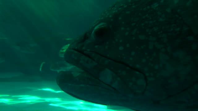 Big Fish Close Up