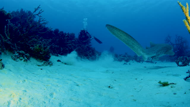 big fish lying on seabed among rare hard corals endangered by deforestation - mining stock videos & royalty-free footage