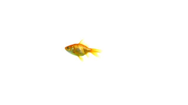 große fische, kleine fische möchte 1080 p - kleine gruppe von tieren stock-videos und b-roll-filmmaterial