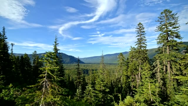 Big green idyllic fir and pine forest valley under a blue sky upper Hood River Valley from Mt. Hood summer