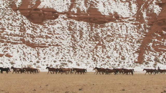 SLO MO WS Big herd of horses in snowy landscape being herded by cowgirl and cowboys / Shell, Wyoming, USA