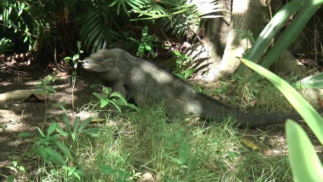 vídeos de stock e filmes b-roll de grande-hd 60i 2 - árvore tropical