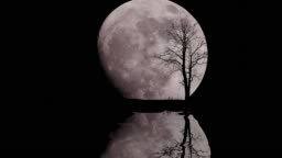 Big moon with alone tree in starry night sky