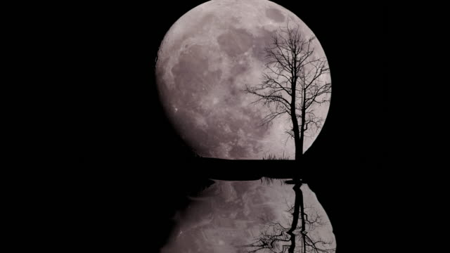 big moon with alone tree in starry night sky - controluce video stock e b–roll