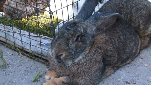 big rabbit on the market - 2009 stock videos and b-roll footage