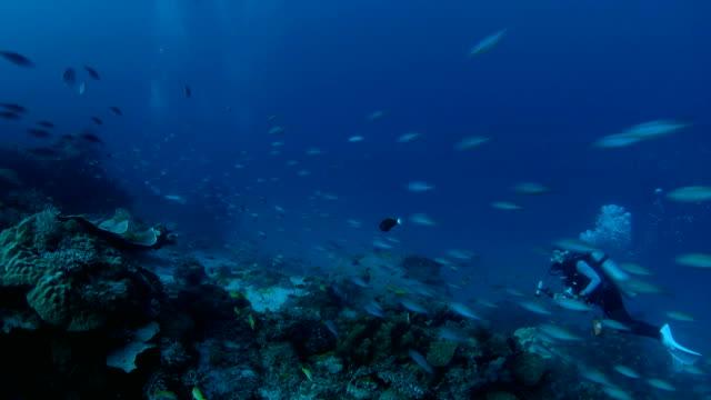 Große Schule der fusiliers Schwimmen über Korallenriff schnell