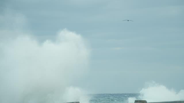 vídeos y material grabado en eventos de stock de big sea waves splashing onto the malecon coastal road in havana, cuba on a cloudy day - pared de cemento