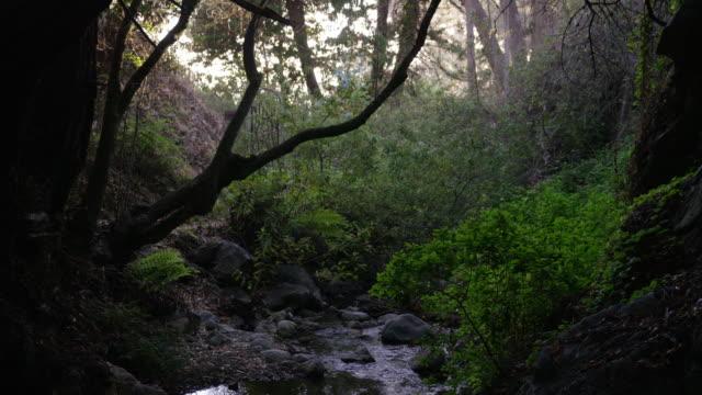 Big Sur forest brook